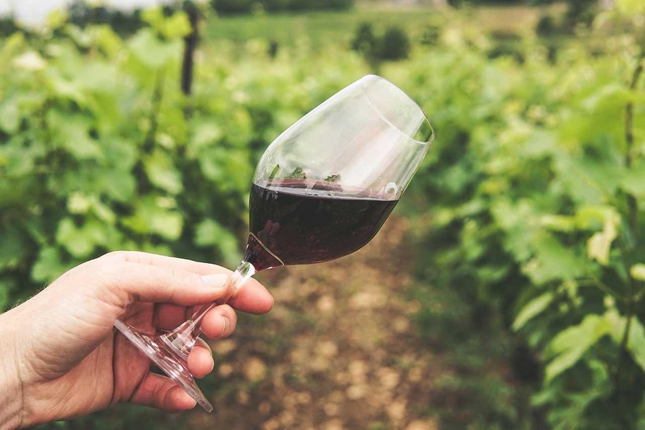 Wine Industry in Napa Valley
